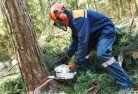 Bonython Tree cutting services 21