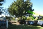 Bonython Tree lopping 14