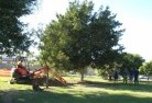 Bonython Tree lopping 15